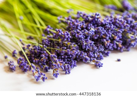 Row of close-up wild mountain lavender flowers on white background - stock photo