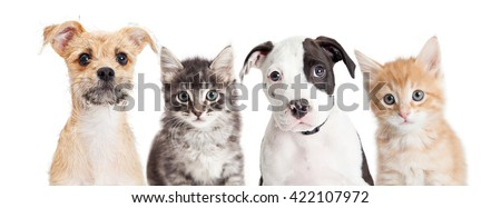 Row of cute puppies and kittens on a long horizontal banner. Sized to fit a popular social media cover placeholder.
