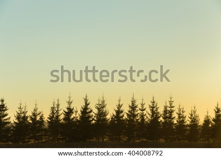 Row of Evergreen Trees silhouetted on a twilight sky. Abstract background nature photography with gradient blue and yellow sky. Backdrop with place for your own text. Series of silhouette young pines  - stock photo
