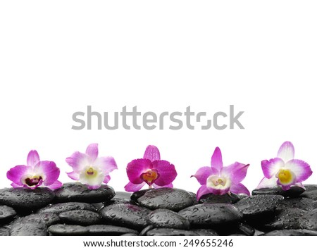 Row of five orchid on wet stones - stock photo