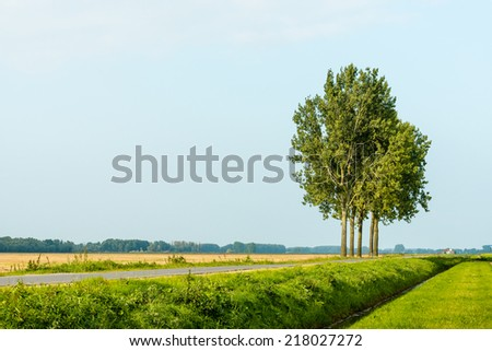 Row of five tall trees beside a country road and a straight ditch in a Dutch polder landscape during the summer season.. - stock photo