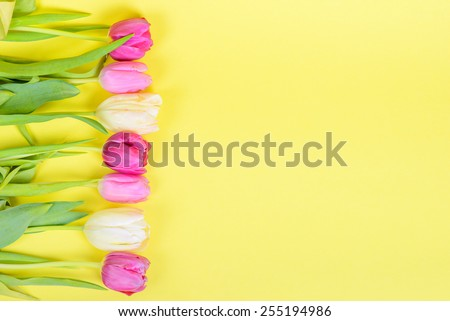 Row of multicolored tulips for border or frame over yellow paper - stock photo
