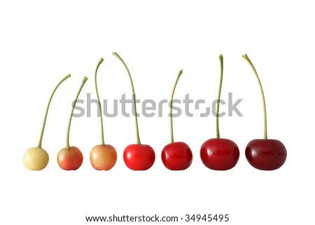 Row of seven cherryes with stems. From green to red. Evolution concept. - stock photo