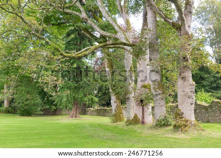 Row of slightly crooked trees in the lush green gardens of Scone Palace, Scotland - stock photo