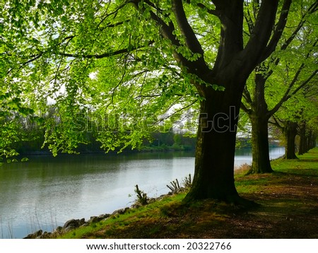 Row of trees by the river - stock photo
