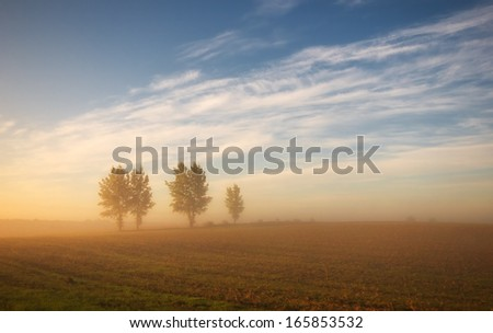 Row of trees in fog in autumn - stock photo