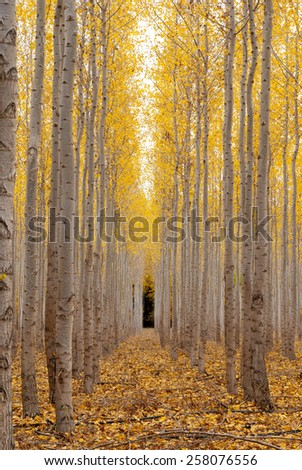 Row of trees lead to the dark forest in autumn - stock photo