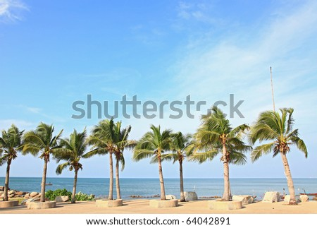 row of tropical coconut trees on the beach - stock photo