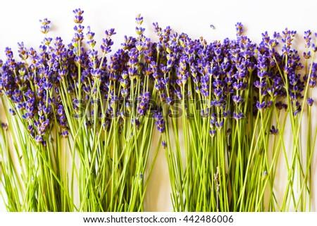 Row of wild mountain lavender flowers on white background - stock photo
