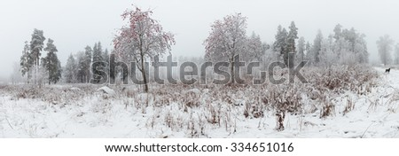 Rowan on winter clearing in the woods. Landscape, panorama. - stock photo