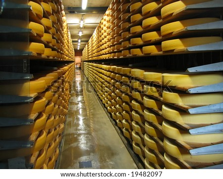 Rows of cheese loafs, maturing in a cellar - stock photo