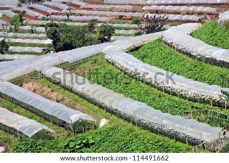 Rows of greenhouses for growing plants. - stock photo