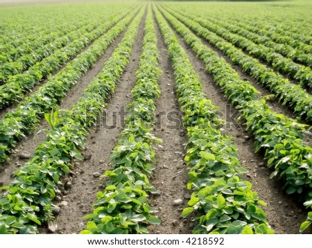 rows of plants - stock photo