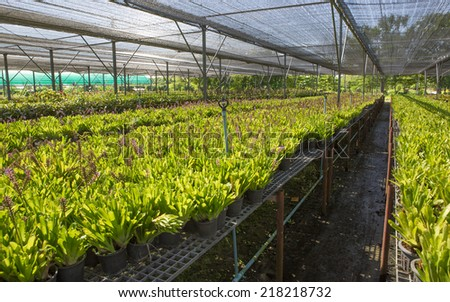 Rows of seedlings and young plants in greenhouses. - stock photo