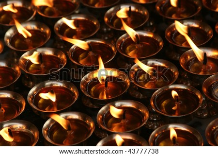 rows of tibetan oil lamps for offering