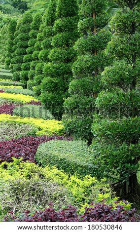 rows of tree in garden - stock photo