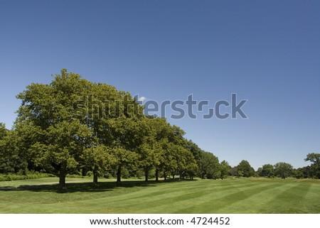 Rows of trees next to the golf fairway - stock photo