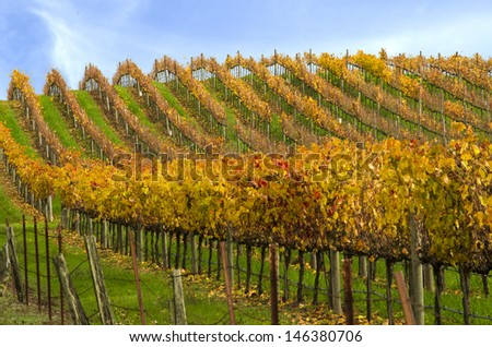 Rows of Vineyards - stock photo