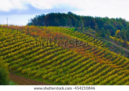 rows of vineyards in autumn bright colors. the vineyard and its fruits: grapes and wine