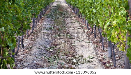 Rows of vineyards of the Douro Valley, Portugal that illustrators the viticulture and heritage - stock photo