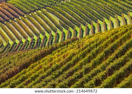 Rows of yellow and green vineyards on the hills of Piedmont, Northern Italy in autumn. - stock photo