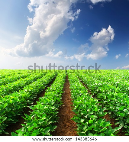 Rows on the field. Agricultural composition - stock photo