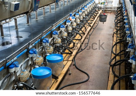 Rows with milking machines on dairy farm - stock photo