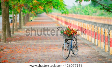 Royal Poinciana road with bicycle (Delonix Regia) . Flower summer of Vietnam - stock photo