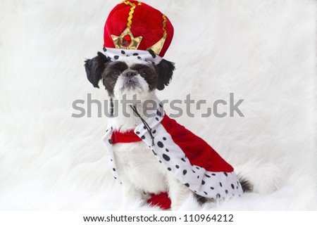 Royal puppy in red robe and crown.