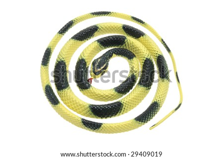 Rubber Snake on Isolated White Background