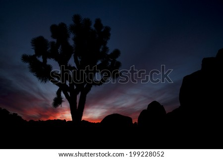 Ruby and deep blue sunset with lone joshua tree and rock formations, Joshua Tree National Park - stock photo