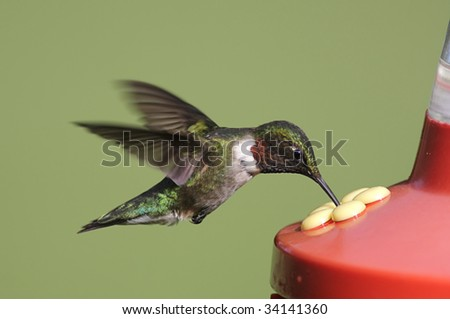 Ruby-throated Hummingbird (archilochus colubris) at a feeder with a green background - stock photo