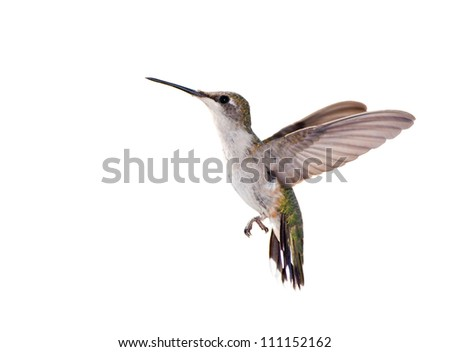 Ruby-throated Hummingbird in flight isolated on white