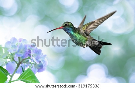 Ruby-throated hummingbird in the garden - stock photo