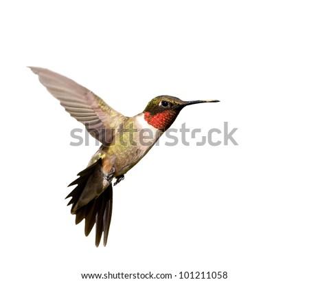 ¿Por qué el Heck hace la cara de este colibrí parezca un pulpo púrpura brillante?