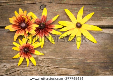 Rudbeckia flowers on wooden table background with copy space - stock photo