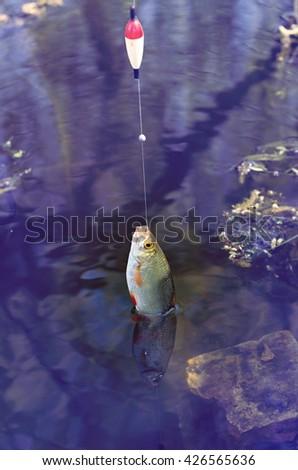 rudd caught on fishing gear, retro tuning - stock photo