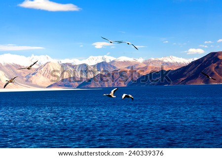 Ruddy shelducks flying off at Pangong Tso lake in India. Pangong Lake in Ladakh, Jammu and Kashmir State, India. Pangong Tso is an endorheic lake in the Himalayas situated at a height of about 4,350 m - stock photo