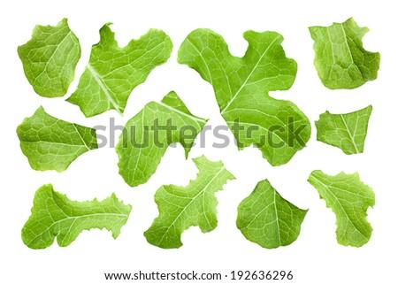 Rugged lettuce salad set isolated on white - stock photo