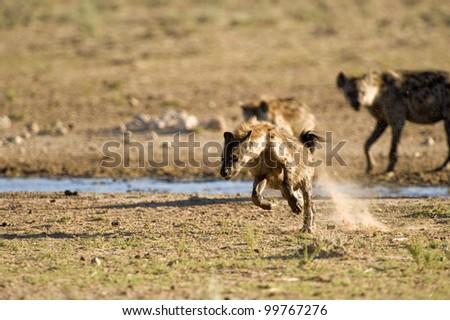 Run Spot RUN !!!! - stock photo