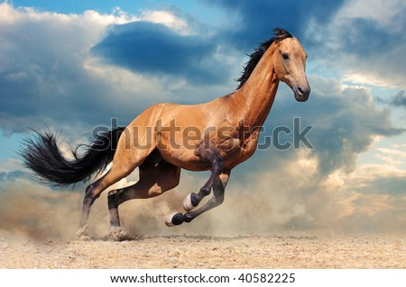 Running bay horse against blue sky - stock photo