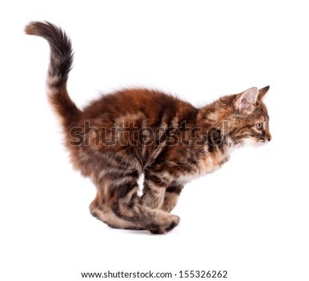 Running cute kitten, isolated on white background  - stock photo