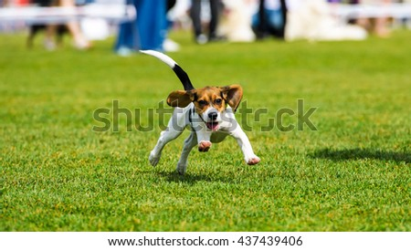 Running dog - stock photo