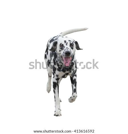 running dog -- isolated on white background - stock photo