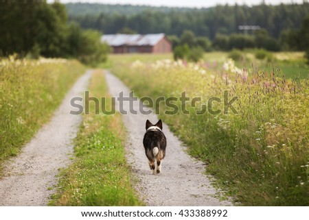 Running dog on a country road - stock photo
