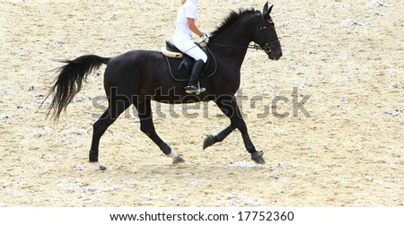 running dressage horse - stock photo