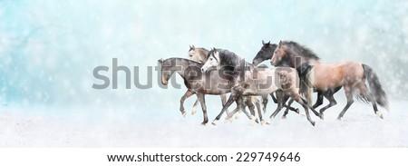 Running horses herd,  in snow, winter banner for website - stock photo