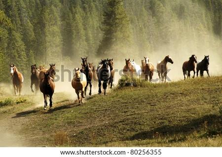 Running horses on Montana ranch - stock photo