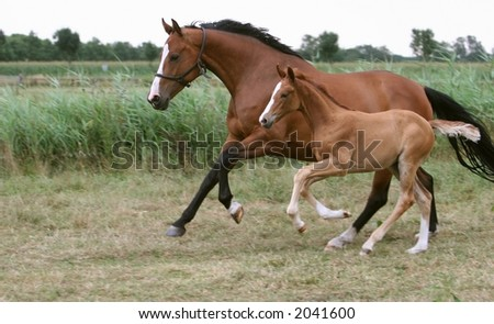 running mare and foal - stock photo