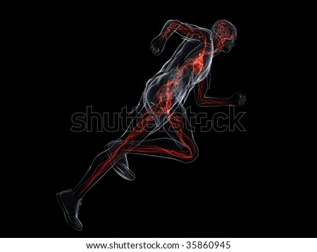 running - vascular system - stock photo